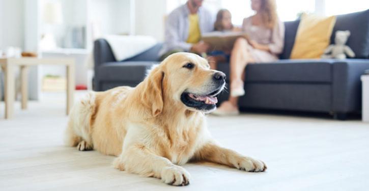 Pets: nos condomínios eles têm direitos, mas também têm deveres