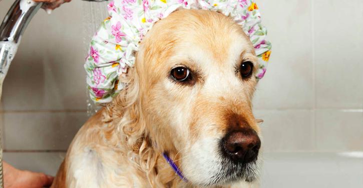 Como deve ser a higienização dos locais onde gatos e cachorros defecam, em condomínios?