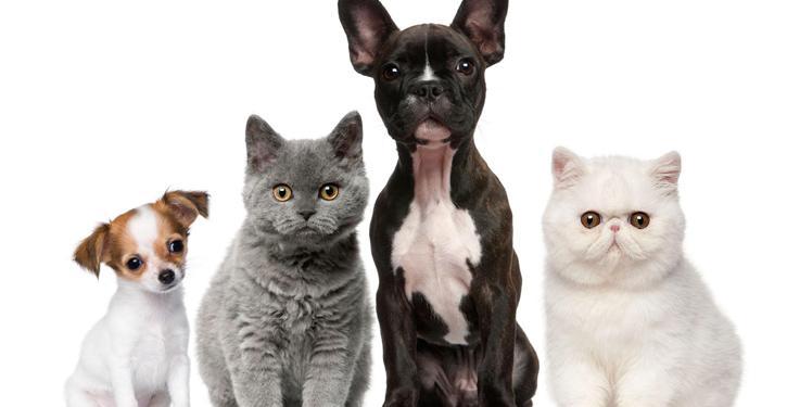 Animais no condomínio: como conviver com harmonia