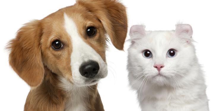 Pets ganham espaço nos condomínios